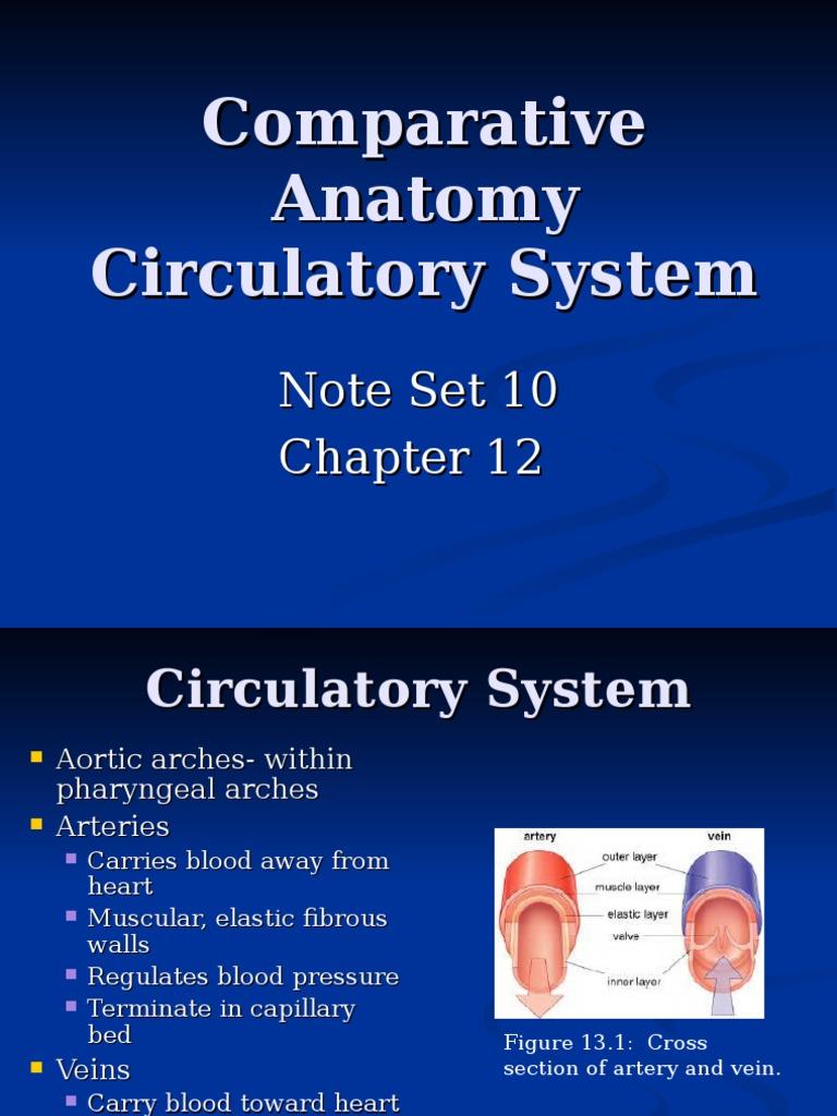 CA Section 12- Circulatory System (Chapter 12) | Heart | Circulatory ...