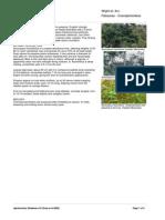 Acrocarpus_fraxinifolius