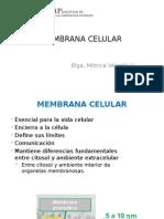 MEMBRANA-CELULAR-TRANSPORTE-copia.pptx