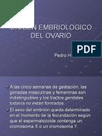 Origen EmBrioloGiCo deL ovaRio