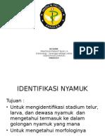 RESUME PARASIT IDENTIFIKASI NYAMUK.pptx