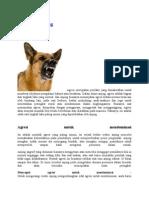 Agresi Pada Anjing