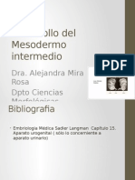 Desarrollo Del Mesodermo Intermedio