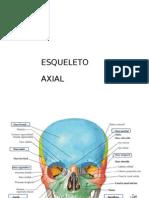 (493375797) Esqueleto Axial