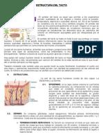 Estructura Del Tacto