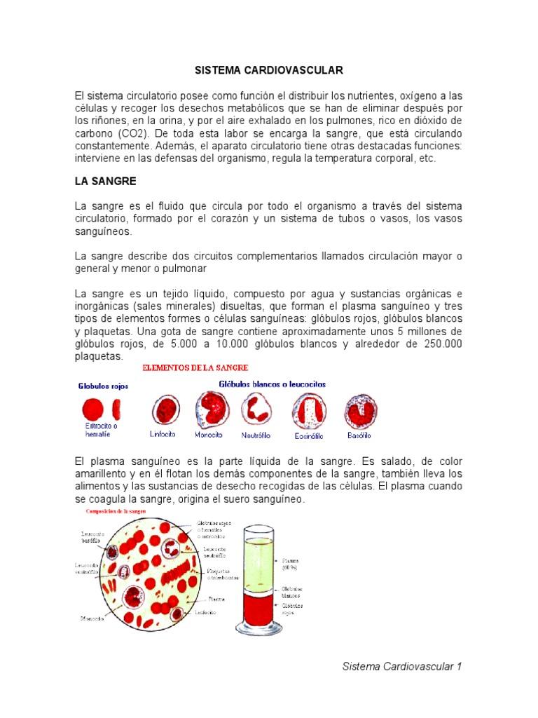 Circuito Sanguineo : Resumen sistema cardiovascular