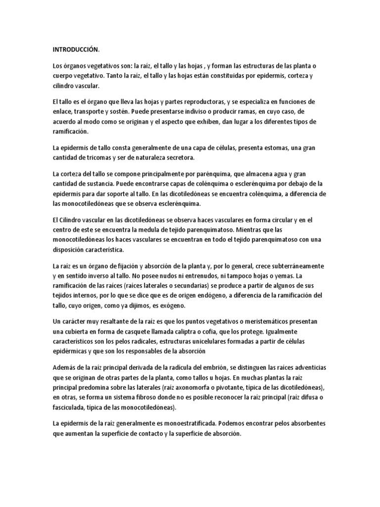 Reporte Plantas Anatomia Vegetal