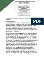 Aparato Genital. PDF