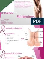 Genitales Fem