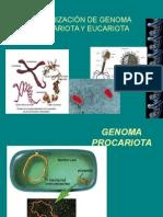 Genoma Procariotico y Eucariotico