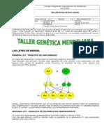 Taller Genética Mendeliana Undécimo
