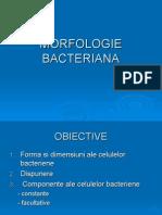Curs Morfologia Bacteriana