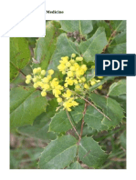 Oregon Grape as a Medicine