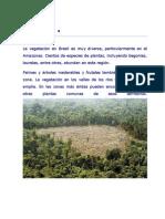Flora y Fauna de Brasil
