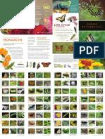 butterfly brochure pf5