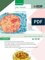 practica 5.ppt