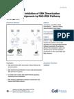 Small Molecule Inhibition of ERK Dimerization Prevents Tumorigenesis by RAS-ERK Pathway Oncogenes