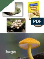 Aula 4 (Fungos)