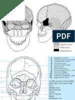 Anatomi Radiologi Diba