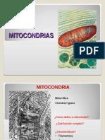 Mitocondria 2012 Vesalius