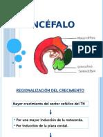 Encéfalo- Presentacion Final Embrio