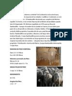razas de ovinos