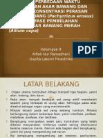 9. Bawang Merah Biji Bengkuang Alfiah-Gupita - Copy