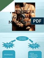 Patologia Genital Masculina