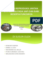 ANATOMI REPRODUKSI JANTAN DAN BETINA PADA SAPI DAN.pdf