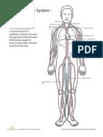 Inside Out Anatomy Cardiovascular