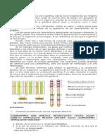 Guia Introducción a Variabilidad y Herencia.