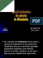 Specii Endemice de Plante in Romania