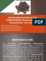QUIMIORESISTENCIA EN GARRAPATAS Rhipicephalus (Boophilus) microplus.pptx