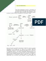Tipos de Metabolitos