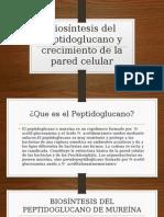 Biosíntesis Del Peptidoglucano y Crecimiento de La Pared