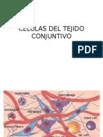 Células Del Tejido Conjuntivo