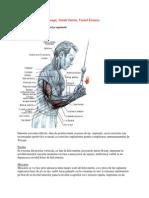 exercitii-culturism.pdf