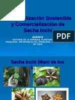 Industrialización Sostenible y Comercialización de Sacha Inchi