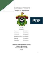 Tugas Parasitologi Veteriner I (CACING-PITA-Taenia-solium)