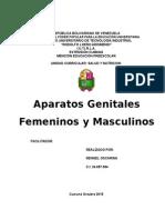 Informe i Aparato Genital Masculino