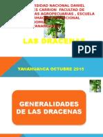 EXPOSICION DRACENAS 1.pptx