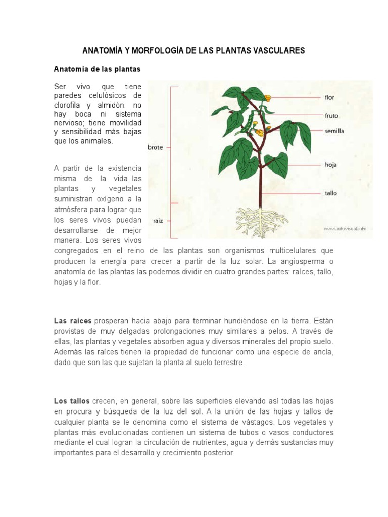 Anatomia y Morfologia de Las Plantas Vasculares