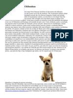 Canil Aventura Do Chihuahua