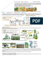 Modernización de la agricultura en Argentina, transgénicos