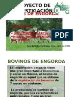 BOVINOS DE ENGORDA-PROYECTO.pptx