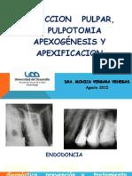 Proteccion Pulpar Pulpotomia Apexificacion 2015