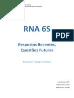 6S RNA