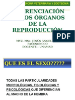 "DIFERENCIACIÃ""N-SEXUAL - copia.ppt"