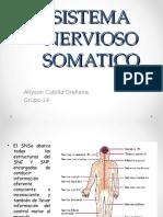 Sistema Nervioso Somatico y Enterico