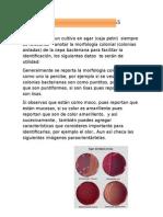 MORFOLOGIA-DE-LAS-COLONIAS.docx